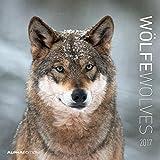 Wölfe 2017 - Wolves - Broschürenkalender (30 x 60 geöffnet) - Tierkalender - Wandplaner