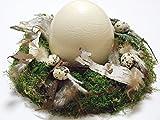 OSTERKRANZ MIT STRAUßENEI / Osterdeko/ Saisondeko/ Tischdeko/ Naturdeko/ Lifestyle-Deko/ Geburtstag/ Valentinstag/ Einzug/ Naturmaterialien Birke, Moos