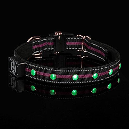 DOGNESS LED Nylon Hundehalsband, USB wiederaufladbare Lichter, mit 3 Leuchtmodi für Sicherheit bei Nacht, Wasserdichtigkeit, verstellbar und geeignet für mittelgroße Hunde, Lila und Blau, passende Leine separat verkauft wird (L, Lila) (Nylon Hundehalsband)