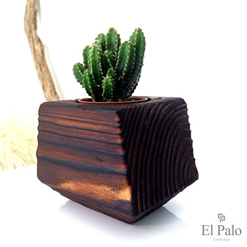 1-kaktus-55-cm-durchmesser-topf-aus-holz-el-cactus-10-el-palo-germany