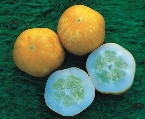 Just Seed Gemüse Gurke Crystal Lemon 1000 Samen Bulk Pack