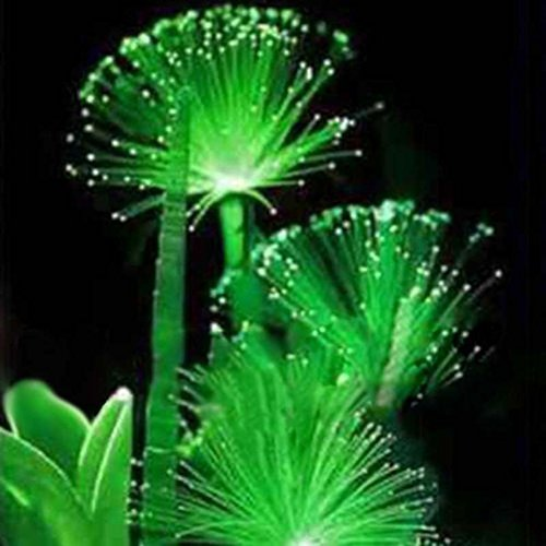 WuWxiuzhzhuo 100seltene Smaragd Fluoreszierend Blumensamen, Night Light Emitting Pflanzen Garten 1