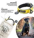 Jack & Russell Premium Hundehalsband Luna reflektierend und Neopren gepolstert Hunde Halsband div. Größen und Farben (Halsumfang L (43-58 cm), Gelb)
