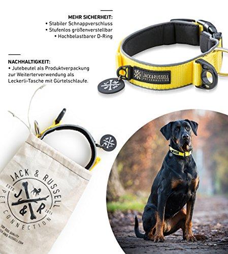 Jack & Russell Premium Hundehalsband Luna reflektierend und Neopren gepolstert Hunde Halsband div. Größen und Farben (Halsumfang S (28-35 cm), Gelb) -