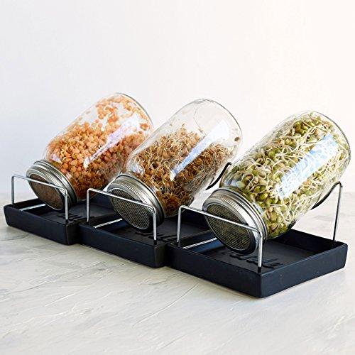 Sprouter Einmachglas Set - 3 Sprouter Mason Gläser mit Siebdeckel, Ständer und Tabletts - Sprout Keimer, um Ihre eigenen Bio Alfalfa Brocolli Microgreens Bohnen Samen Sprossen