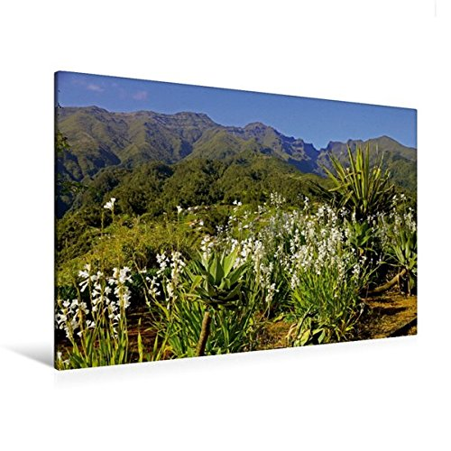 Calvendo Premium Textil-Leinwand 120 cm x 80 cm quer, Nordseite | Wandbild, Bild auf Keilrahmen, Fertigbild auf echter Leinwand, Leinwanddruck Natur Natur