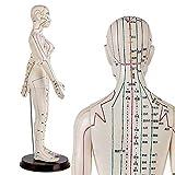60CM Menschliche Akupunktur weibliches Modell Chinesische Medizin Akupunktur Menschliche Anatomie Modell für das Lernen Meridiane und Akupunkte