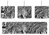 Monocrome, Zebras, Safari, Sonnenuntergang, Afrika inkl. Lampenfassung E27, Lampe mit Motivdruck, tolle Deckenlampe, Hängelampe, Pendelleuchte - Durchmesser 30cm - Dekoration mit Licht ideal für Wohnzimmer, Kinderzimmer, Schlafzimmer
