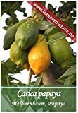 Exoten Samen - 10 Stück - Cairica papaya - Melonenbaum, Papaya