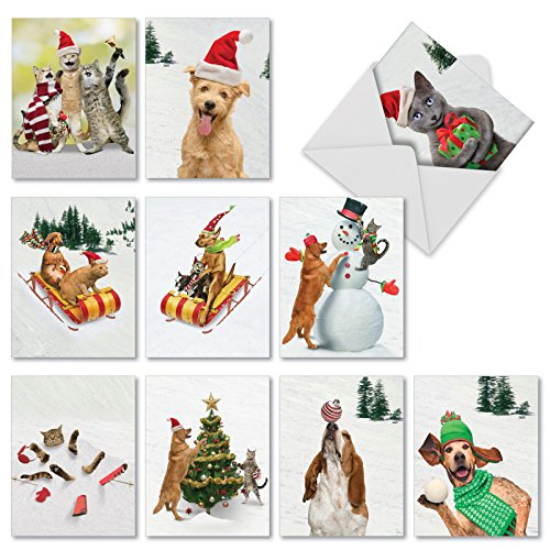 Animal Antics Weihnachten Funny Paper Karte 10 Assorted Blank Note Cards (M1731XB) 10 Assorted Blank Note Cards (M1731XB)