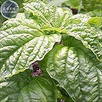 Visa Store Graines de 2018 Hot Sale Davitu Mammoth Basil, 20 graines, comportant de très grosses feuilles ressemblant à la laitue avec une saveur exceptionnelle E4231