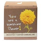 """Geschenk-Anzuchtset """"Sunshine Flower"""" - Teddybär Sonnenblume -"""