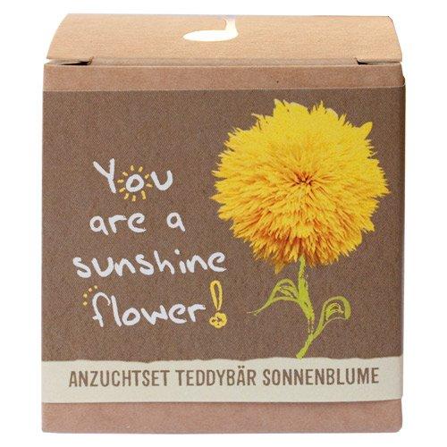 Sonnenblume (Geschenk-Anzuchtset