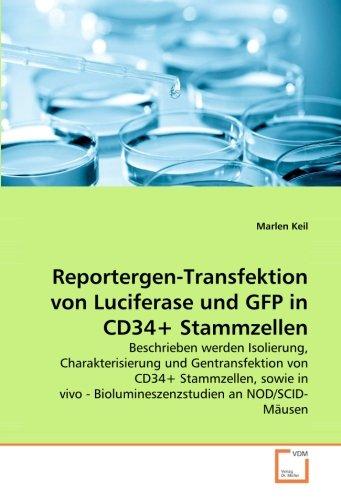 Reportergen-Transfektion von Luciferase und GFP in CD34+ Stammzellen: Beschrieben werden Isolierung, Charakterisierung und Gentransfektion von CD34+ ... - Biolumineszenzstudien an NOD/SCID-Mäusen