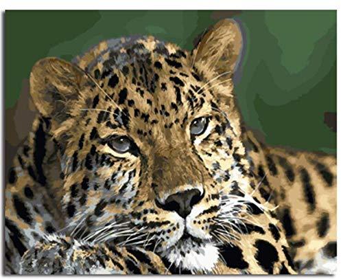 JRSART DIY Ölgemälde Malen Nach Zahlen Erwachsene Für Kinder - Tiger 40X50Cm - Rahmenlos (Elefant Größe Gefüllte Leben)