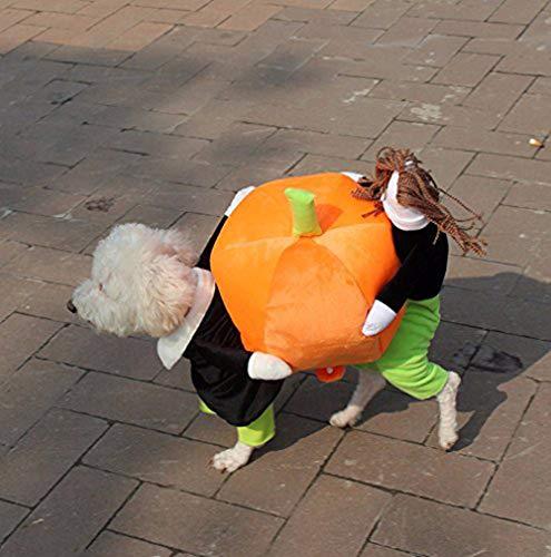 YiZYiF Hund tragen Kürbis Kostüm/Piratenkostüm komische Kleidung Katze Haustier Hundekostüm S-2XL (XX-Large, Kürbis ()