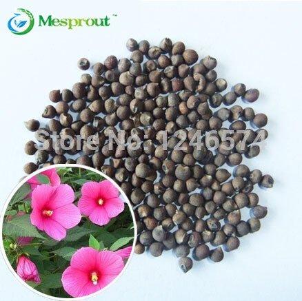 Time-Limit !! 10pcs / paquet * délicieux Violet Aubergine graines Semences potagères, plantes bonsaï pour le jardin de la maison, # OMBAW1