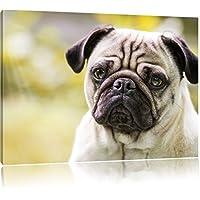 Mopsporträt, formato: 120x80 su tela, XXL enormi immagini completamente Pagina con la barella, stampa d'arte sul murale con telaio, più economico di pittura o un dipinto a olio, non un manifesto o un banner,