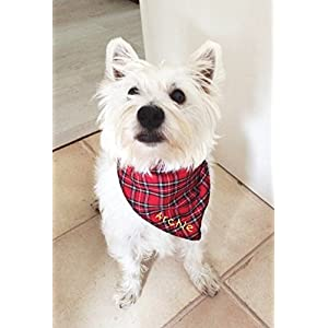 Spoilt-Rotten-Pets-S2-Personalised-Red-Tartan-Designer-Dog-Bandana-Size-2-Fantastic-Quality-Adjustable-Design-Personalised-With-Any-Name-Red-Tartan-Royal-Stewart-Kilting