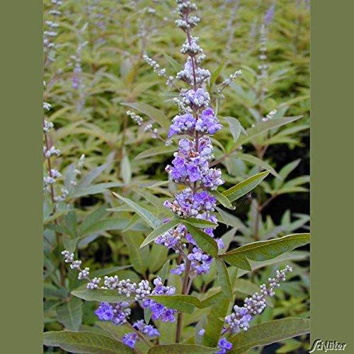OBI Kübelpflanze, Bienenweide
