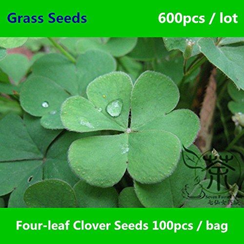 Clover quattro foglie di trifoglio Semi 600pcs, rappresentano la Fede Speranza Amore Fortuna Erba Semi, Lucky Grass quadrifoglio Sementi Sementi