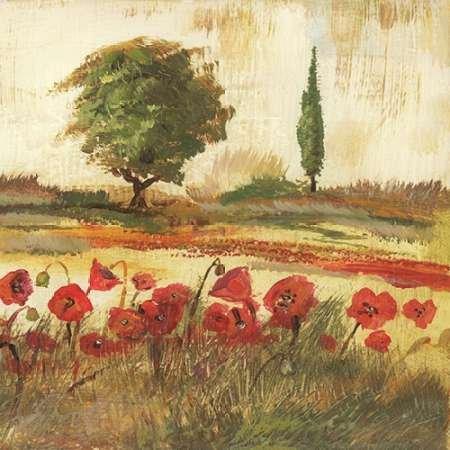 Poppy Field III von Gorham, GREGORY–Fine Art Print erhältlich auf Leinwand und Papier, canvas, SMALL (16.5 x 16.5 Inches )