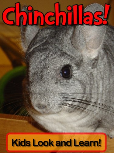 Chinchillas! Learn About Chinchillas and Enjoy Colorful Pictures - Look and Learn! (50+ Photos of Chinchillas) (English Edition)