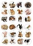 24Mix pour gâteaux 4cm sur glaçage–Animal–Cheval Hérisson Chien Chat
