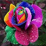Semillas de Rosas Coloridas Semillas de Rosas Color de Semillas de Rosas Decoración Del Jardín Familiar (200 Piezas)