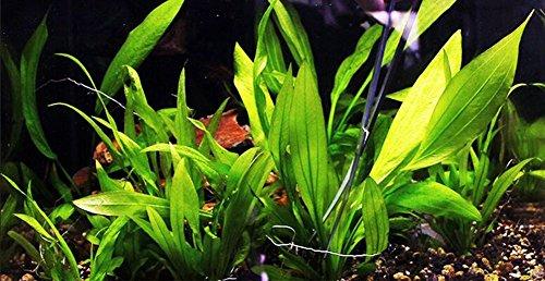 UMIWE 5 Pcs Stainless Steel Aquarium Scissors Tweezers Spatula Aquascaping Tools Set for Fish Tank Plants 5