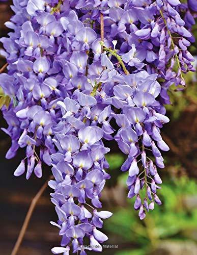 Notebook: Blue rain flower violet wisteria plant blossom cobalt navy ultramarine color prussian Blossom Navy