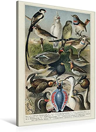 Robe de mariée ou des oiseaux, dessin: P. Femmeges ldorff | Une Forte Résistance à La Chaleur Et Résistant à L'usure