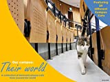 Our Campus Their World: A collection of 20 beloved Campus Cats from around the world (English Edition)