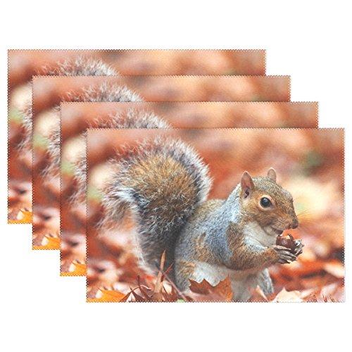 wozo Autumn Maple Leaf Eichhörnchen Tisch-Sets Tisch Matte 30,5x 45,7cm Polyester Tischset für Küche Esszimmer, Polyester, multi, Package Quantity: 4 -