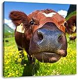 Süße Alpen Kuh auf Bergwiese, Format: 60x60 auf Leinwand, XXL riesige Bilder fertig gerahmt mit Keilrahmen, Kunstdruck auf Wandbild mit Rahmen, günstiger als Gemälde oder Ölbild, kein Poster oder Plakat