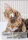 Verliebt in zwei Bengalen (Wandkalender 2019 DIN A3 hoch): Fotografien zweier Bengalkatzenkinder (Monatskalender, 14 Seiten ) (CALVENDO Tiere)
