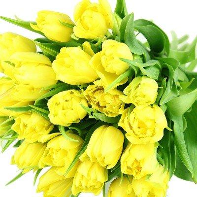 floristikvergleich.de Frische gelbe Tulpen im Bund – Frühlingsblumen