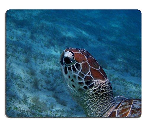 Luxlady Gaming Mousepad Image ID: 24583448Sea Turtle