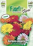 Riesige Gerberamischung von Flortis