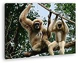 deyoli Zwei kleine Gibbon Affen Format: 60x40 als Leinwandbild, Motiv fertig gerahmt auf Echtholzrahmen, Hochwertiger Di