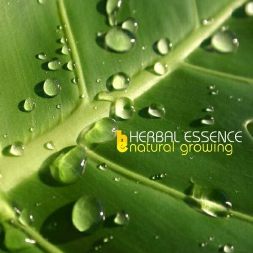 natural-growing-by-herbal-essence