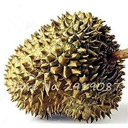 Fash Lady gemischt: 10 Stück Durian Seeds köstliche König der tropischen Gesunde Obstbäume Riesen Gartenpflanzen Bonsai-Baum Non-GMO hohe Ernährung