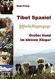 Tibet Spaniel: Großer Hund im kleinen Körper