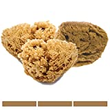 3 FacialCare Sea Sponges - Mediterranean Silk Sea Sponge - Unbleached - Perfect for Cleansing Sensitive Skin - Eco-Friendly - Biodegradable