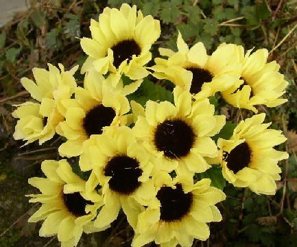 50 Stck. SONNENBLUME Seidenblumen Blume Kunstblumen