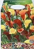Dominik Blumen und Pflanzen, 3 x 3 Zantedeschia, Calla...