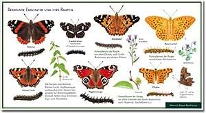 schmetterlinge bekannte edelfalter und ihre raupen wawra naturpostkarte zum entdecken. Black Bedroom Furniture Sets. Home Design Ideas