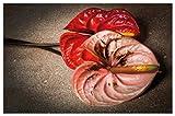 Wallario Herdabdeckplatte/Spritzschutz aus Glas, 1-teilig, 80x52cm, für Ceran- und Induktionsherde, Motiv Blüten Einer Flamingoblume - Anthurie - auf Schwarzem Marmor