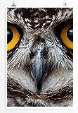Eau Zone Bilder - Tierbilder – Eule im Porträt- Leinwand Kunstdrucke Wandbilder aus Deutschland