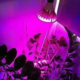 Docooler Giardinaggio Spettro Completo LED Pianta Coltiva la Lampada Piantina Impianto Luce a Effetto Serra Coltiva la Lampada 4 Rosso 1 Blu